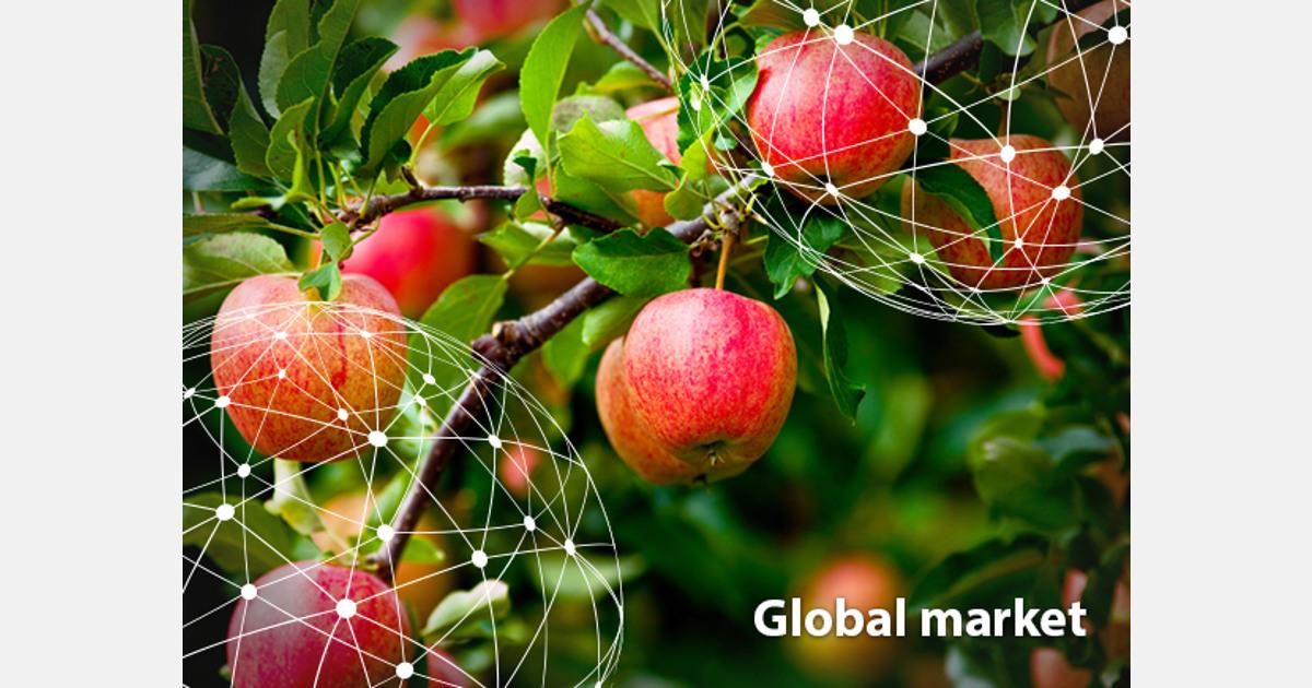 OVERVIEW GLOBAL APPLE MARKET