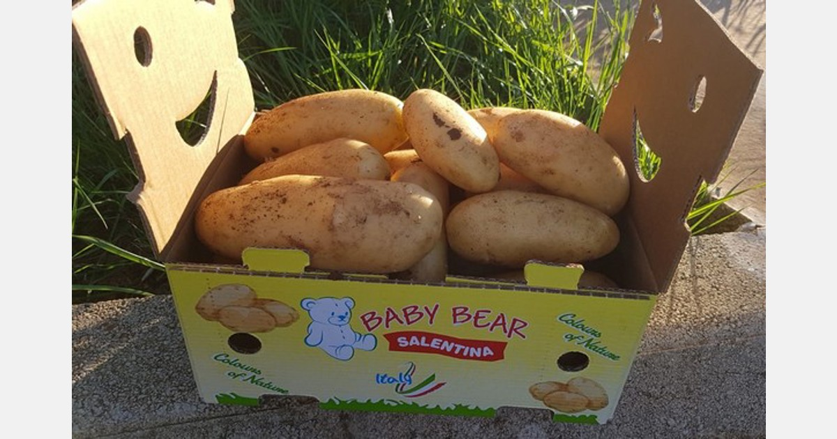 The climate facilitates the export of new potatoes from southern Italy