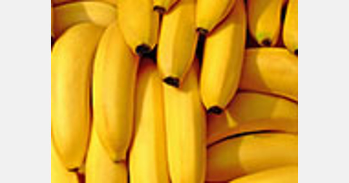 St. Lucia welcomes new banana variety from Taiwan