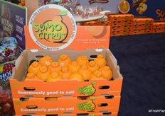Shipper bin with Sumo citrus from Suntreat.