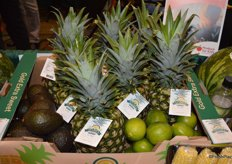 Schmieding Produce introduced a new tropical/exotics product line. In addition to corn, potatoes and watermelons, the company now also offers pineapples, avocados, limes and more under the Nature's Choice brand. All products from the Tropical line are sourced from Costa Rica.