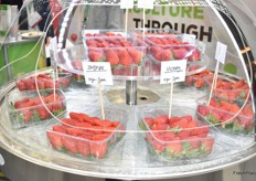 Lovely strawberry varieties from Plant Science - Fragaria.