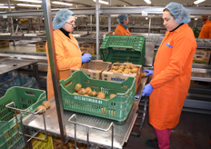These kiwis are checked for any defects, and put into big cartons destined to the UK.