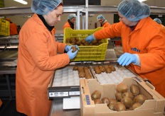 These kiwis are checked for quality issues and then placed into smaller cartons.