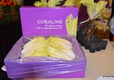 Coraline is a chicory variety that is less bitter and more smooth than Belgian endive. Coraline is mainly used in foodservice, but will become more widely available at retail level.