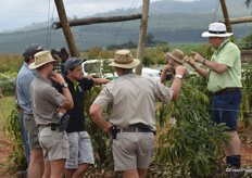 Dr André Ernst explaining the philosophy behind trellising avocados to an interested audience.
