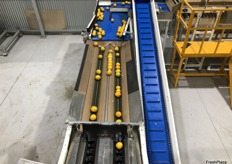 The machine can sort 10 tonnes of fruit an hour