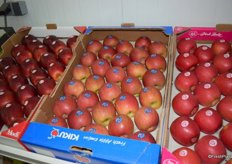 Serbian grown Kiku apples.
