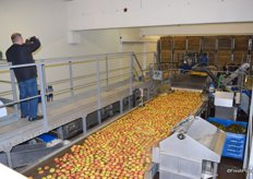 Apples on their way to being sorted.