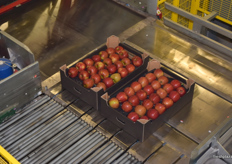 Sorted apples off to be put on pallets for shipment.