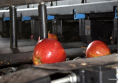 Bialski Owoc is one of the few apple producers which has an optical sorting machine which is also able to look inside the apple for any internal issues.
