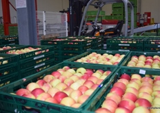 Apples in crates ready to be sent to the customer.