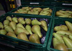 Pears ready to be sent out.