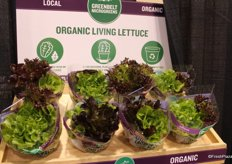 Organic Living Lettuce display of Greenbelt Microgreens