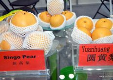 Singo pears and Yuanhuang pears of Botou Dongfang