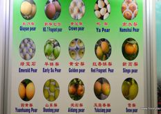 Chinese pear varieties explained