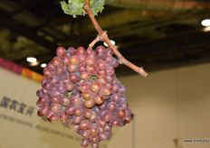 Grapes by Jiyang Derong Ice Beauty Grape Professional Cooperatives from Shandong Province.