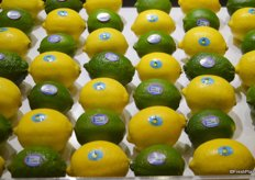 Lemons and limes on display at the Vision booth