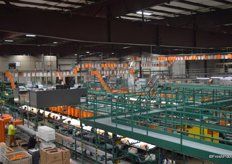 Overview of the Sumo packing line