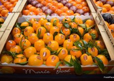 Mandarins with leaf sold under the Marie José brand, exhibited at the stand of Escrig Gourmet.