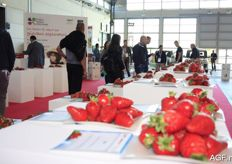 This year's theme of the Macfrut was strawberries. Many different varieties could be admired and tasted, and they drew