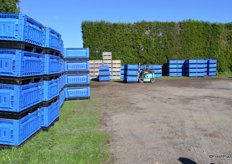 Next we went to see some harvesting, here are blue bins developed by Seeka.