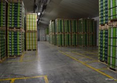 This is a normal static store with no racks, pallets are lined up here to ensure good airflow.