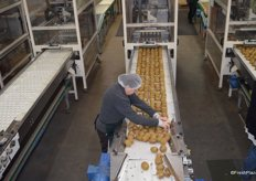 The workers rearrange the fruit before it it automatically put in the single layer trays.